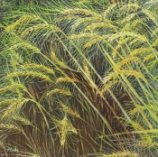 Texas Wheat By Hebe Brooks