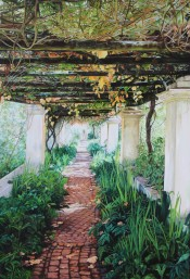 The Vine Walkway By Hebe Brooks