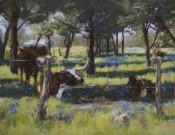 Brenham Longhorns By Shirley Quaid