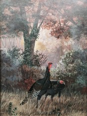 Turkeys In The Clearing By Florent Baecke
