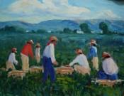 El Paso Harvest By Ellie Taylor
