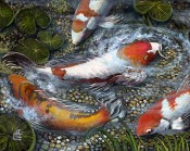 Koi Spawning Party By Laurieann Dygowski