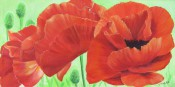 Giant Poppies By Victoria Mauldin