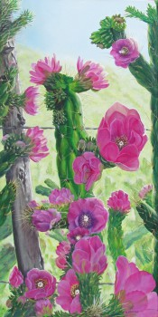 Prickly Profusion By Victoria Mauldin