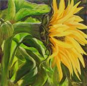 Sunflower Seeking The Sun By Victoria Mauldin