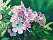 Cairns Flowers By Ramona Freeman