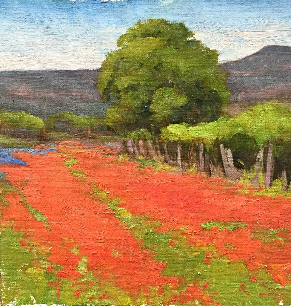 Indian Paintbrush Spring By Bob O'Brian