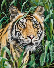 Tiger In The Grass By Victor Blakey
