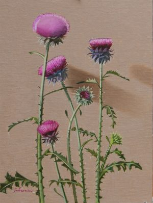Musk Thistle By Mike Schroeder