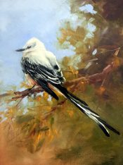 Scissortail Flycatcher By Tina Bohlman